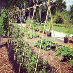 How To Build A Bean Trellis 5 Variations On A String Trellis For Tomatoes Bonnie Plants