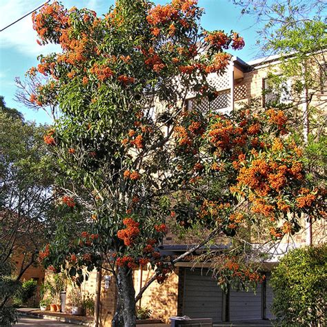 086 tree with orange berries flickr photo sharing