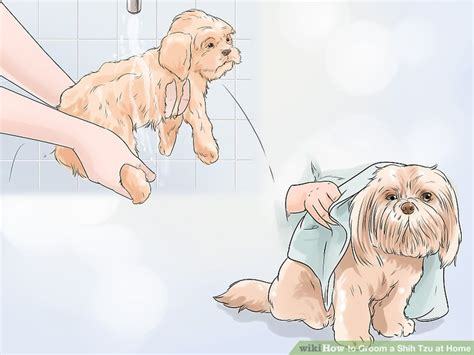 grooming a shih tzu at home 4 ways to groom a shih tzu at home wikihow