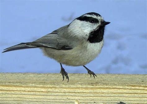 types of winter birds in colorado myideasbedroom com