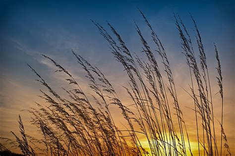 illinois prairie sunset prairie grass sunset photograph by steve gadomski