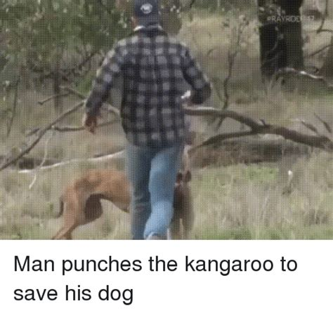 punches kangaroo to save memes of 2016 on sizzle best friend