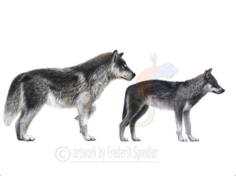 wolf size compared to dire wolf size compared to grey wolf