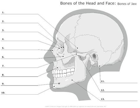 Advanced Free Search Gallery Anatomy Labeling Worksheet Anatomy Diagram Charts