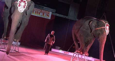 Garden Brothers Circus by Garden Family Circuses Animal Rights Foundation Of Florida