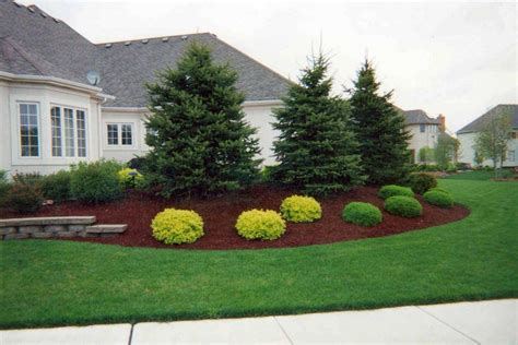 all landscaping evergreen trees everything you ve wanted to