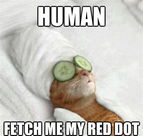 Funny Cat Memes - fetch my red dot funny cat meme
