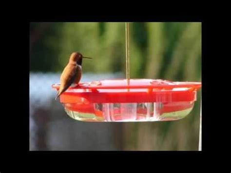 hummzinger highview 12 oz hanging hummingbird feeder best