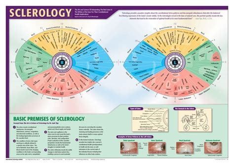 Iridology Detox by 11 Best Iridology Images On Reflexology