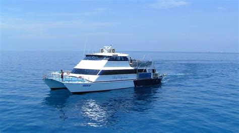 reef experience catamaran reef day tour experience cairns best reef tour
