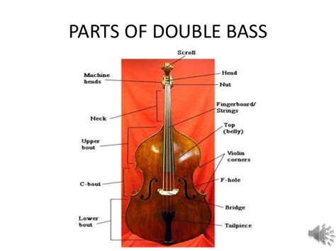 the double and the the double bass