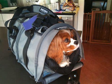in cabin pet travel airplane carriers for in cabin pet travel 187 jaunt