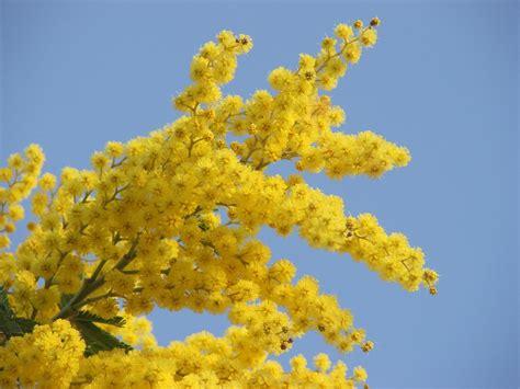 foto 8 marzo fiori in giardino con bakker 187 tutti i retroscena