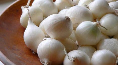 Jual Bibit Bawang Putih Tunggal produk bawang putih tunggal