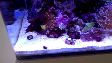 beleuchtung 60l aquarium dennerle nano cube 60l marinus diy led