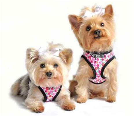 small puppies for free choke free harness pink flowers designer harnesses for small dogs at