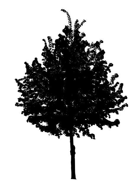 7 Black Tree PNG Image Transparent   OnlyGFX.com