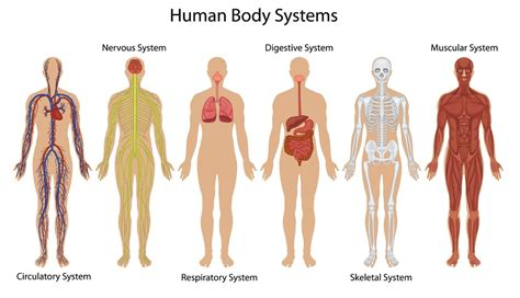 design by humans syntax human body systems thinglink