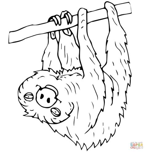 two toed sloth coloring page free printable coloring pages