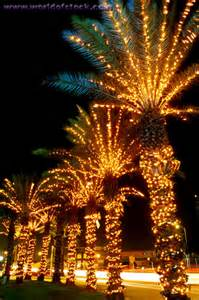 palm trees christmas lights it s beginning to look a lot