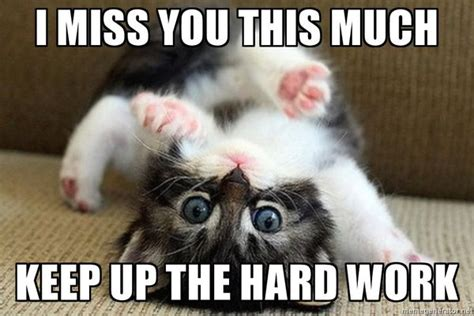 Funny Miss You Meme - i miss you animal memes www pixshark com images