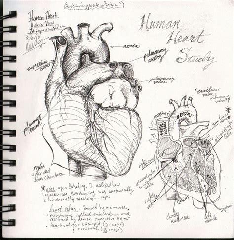 sketchbook draw human sketchbook study by bluesytealyren on deviantart