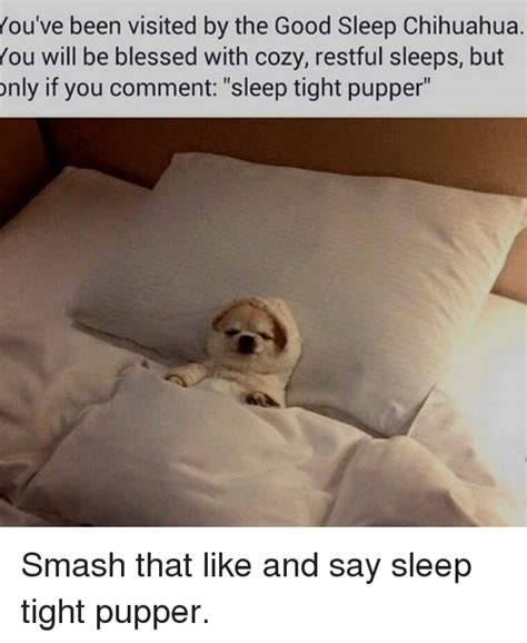 Dog In Bed Meme - 25 best memes about sleep tight pupper sleep tight