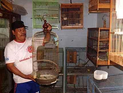 Salep Cap 88 mencegah jamur pada burung smart mastering