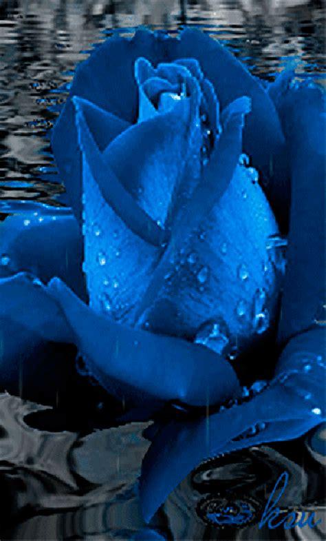 imagenes de rosas azules con movimiento imagenes con movimiento de flores azules con agua