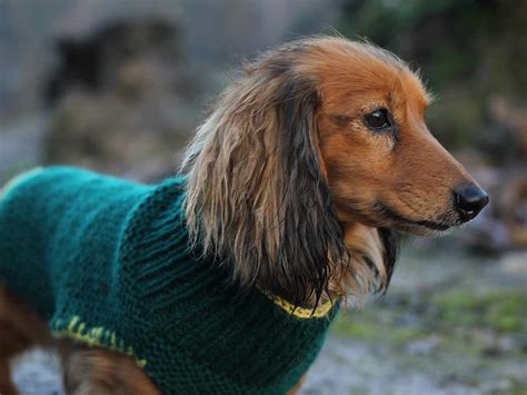 how to knit a puppy coat knitting pattern saga