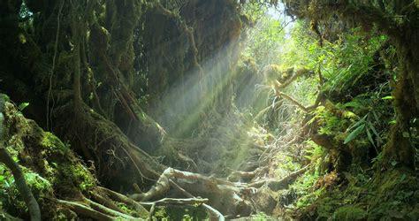 jungle light sun light rays and beams shine through jungle forest