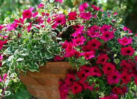 Fleurs Odorantes Pour Balcon by Plantes Et Feuilles Pour Jardini 232 Res Estivales