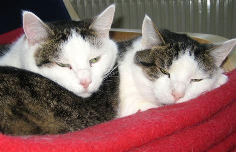 katzen zu hause als eine katze w 252 rmer zu hause zu heilen