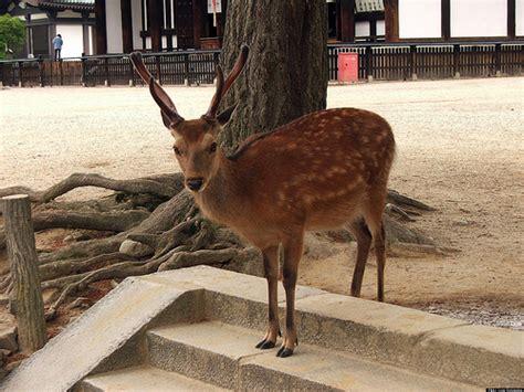glass door ups wage determined deer crashes through glass doors of michigan