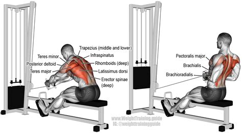 seated cable row exercise and weight