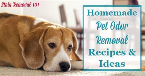 homemade dog shoo for good smell homemade pet odor removal recipes and ideas