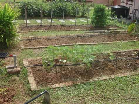 My Little Vegetable Garden Garden Design And It S Outcome Vegetable Garden Design