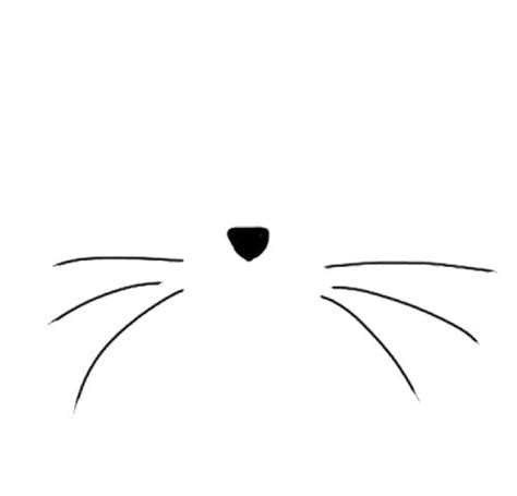 cat nose whiskers cats illustrations