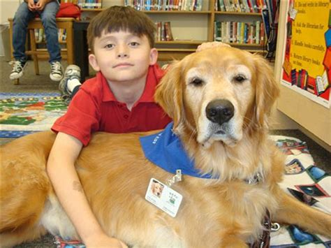 how to puppy to be therapy how therapy dogs are teaching to read freak 4 my pet