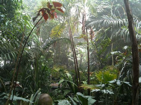 plantes et jardins serres 171 la verte 187 sur 5 c 244 t 233 jardin