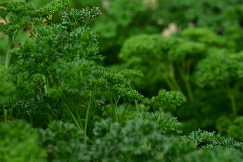 Garten Gestalten Wenig Sonne kr 228 utergarten im schatten anlegen 187 diese kr 228 uter brauchen