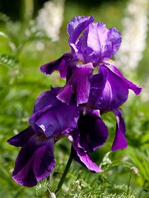 fiori spontanei viola parco nazionale dell appennino tosco emiliano iniziative
