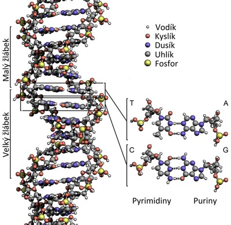 a protein is a linear polymer composed of biotech dictionary gate2biotech