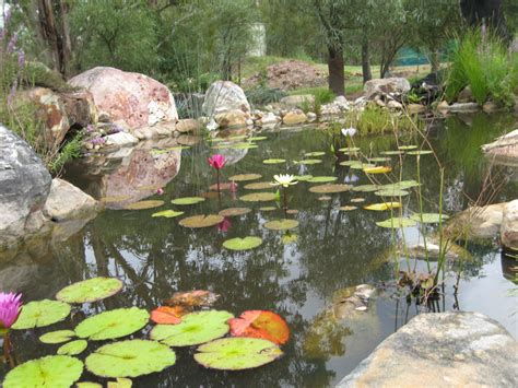Building A Backyard Pond by Pond Building Wallis Creek Watergarden