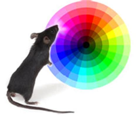 Are Mice Color Blind color vision for mice