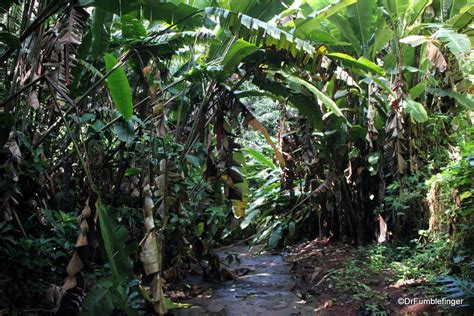 A Tropical Oasis Wahiawa Botanical Garden Oahu Travelgumbo Oahu Botanical Gardens