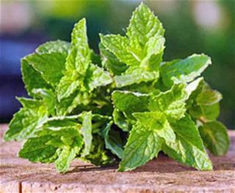 12 plants that repel unwanted insects conscious life news