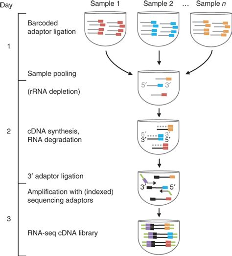 illumina rna seq simultaneous generation of many rna seq libraries in a