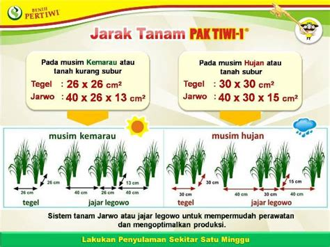 Pupuk Majemuk Untuk Jagung budidaya padi pak tiwi 1 benih pertiwi