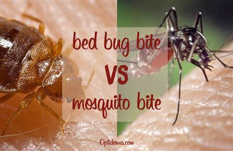 bed bug bites  mosquito bites   differentiate